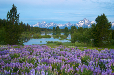 Landscape and Nature Photography by LGV Creative, Grand Teton National Park